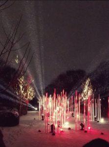 Illumination at Morton Arboretum